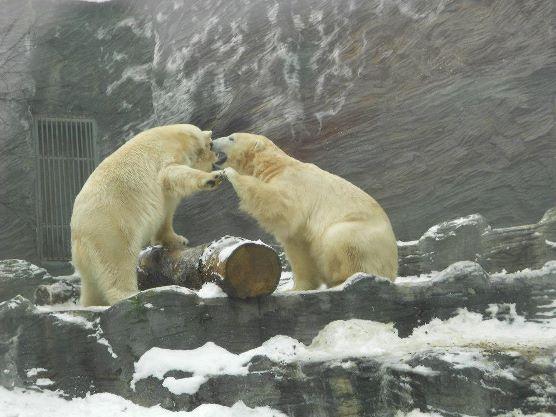 prágai love story...