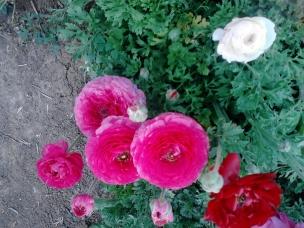IMG_20130323_113638